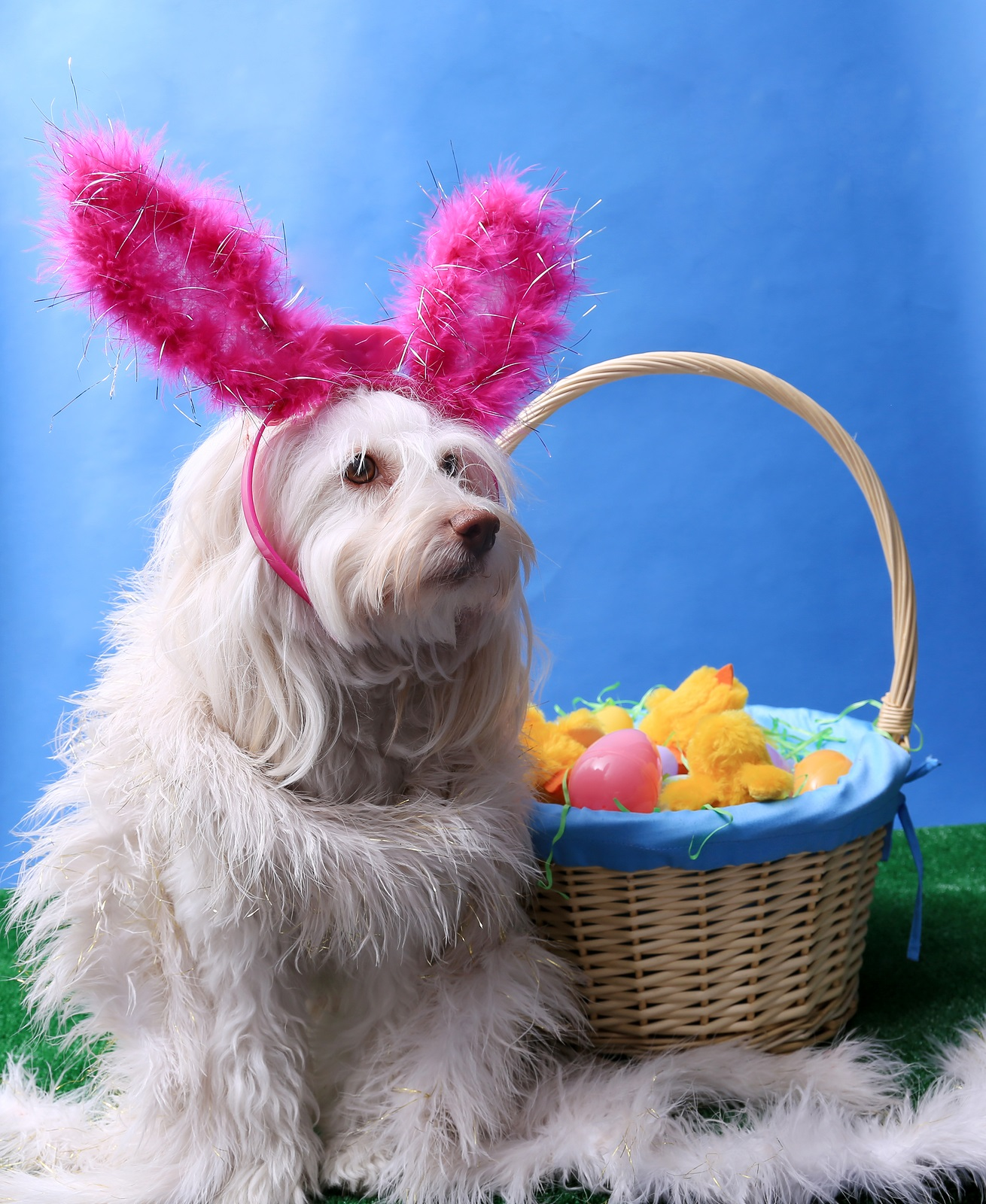 Easter Dog Portrait. A beautiful dog poses for her Easter photos