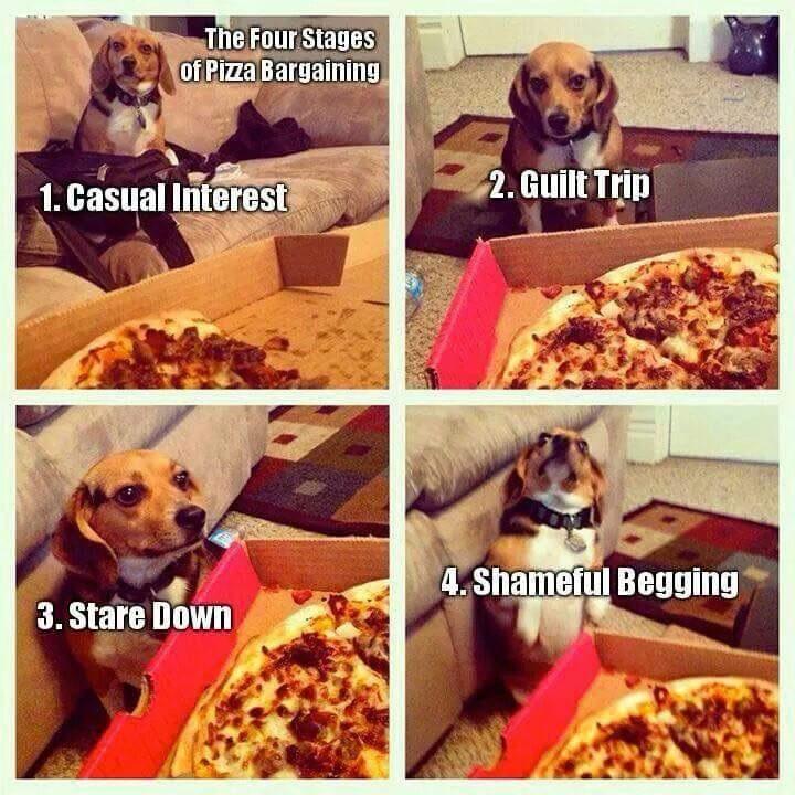 Pizza beagle