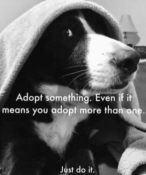 Nike Adopt