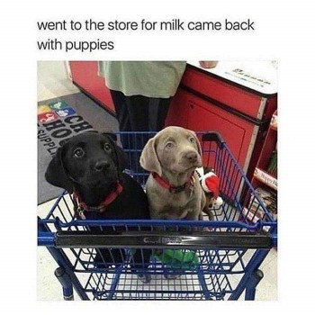 puppy shopping