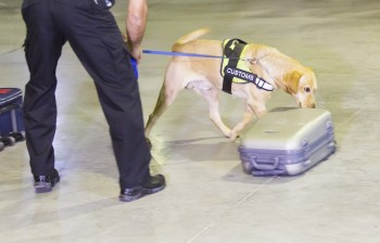 Customs Drugs Detection Dog