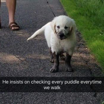 Mud puppy