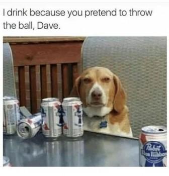 drinking beagle