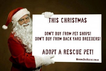 adopt for xmas