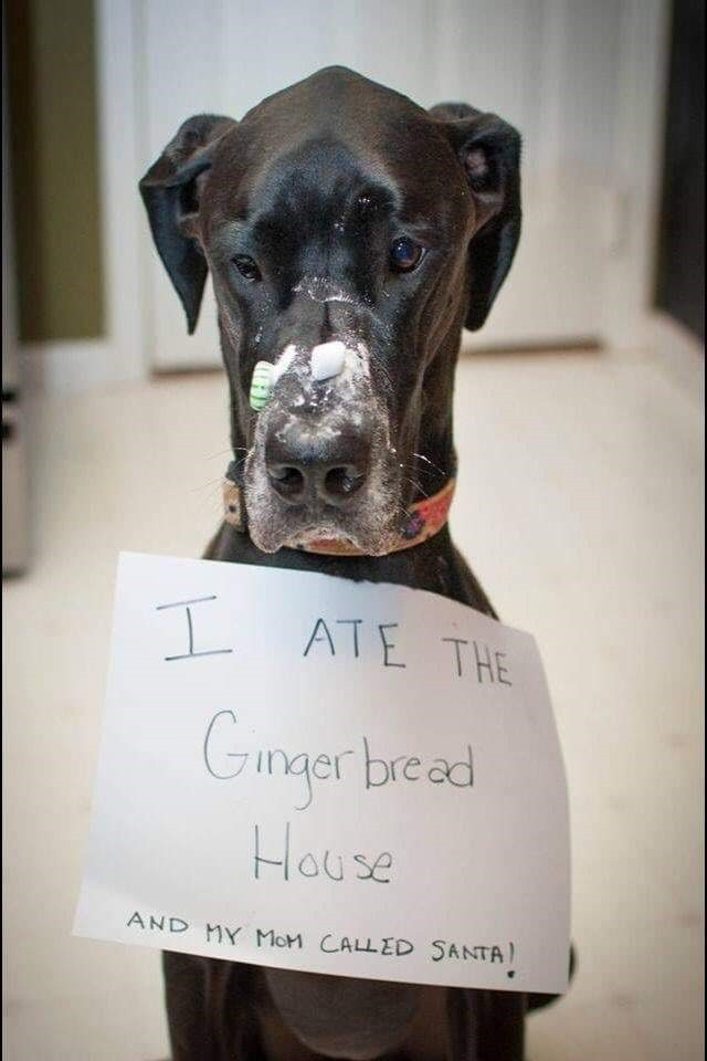 dog ate gingerbread