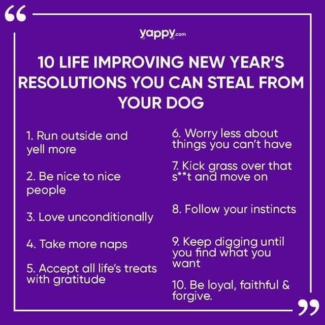 Dog Resolutions