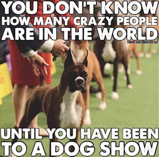 Dog Show People