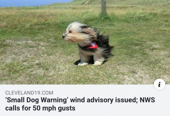 Small Dog Warning