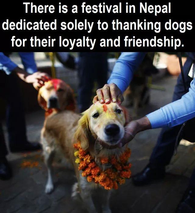 NEpal dogs