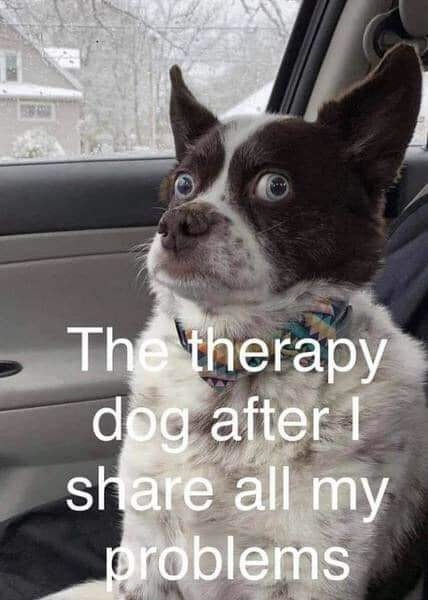 FF Therapy Dog