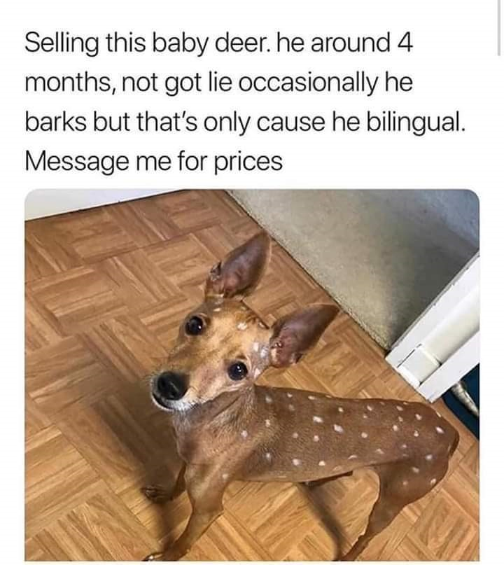 Bilingual deer