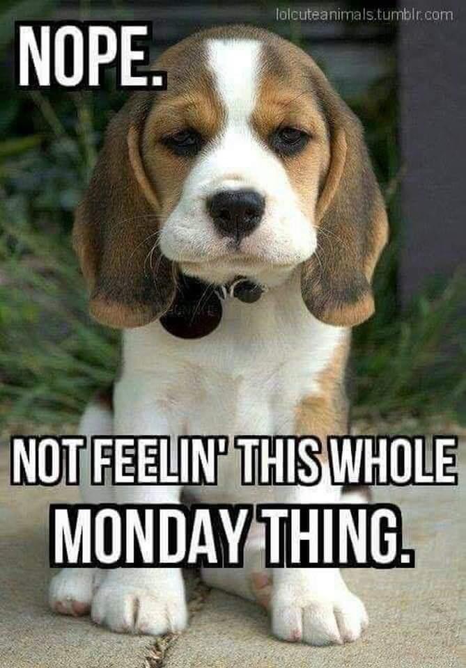 Tumbler pup