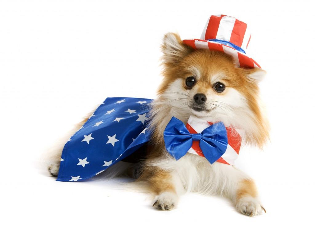 Uncle Sam Pup