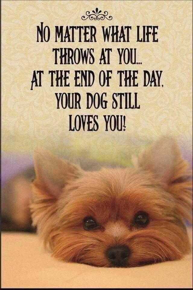 Dog love1