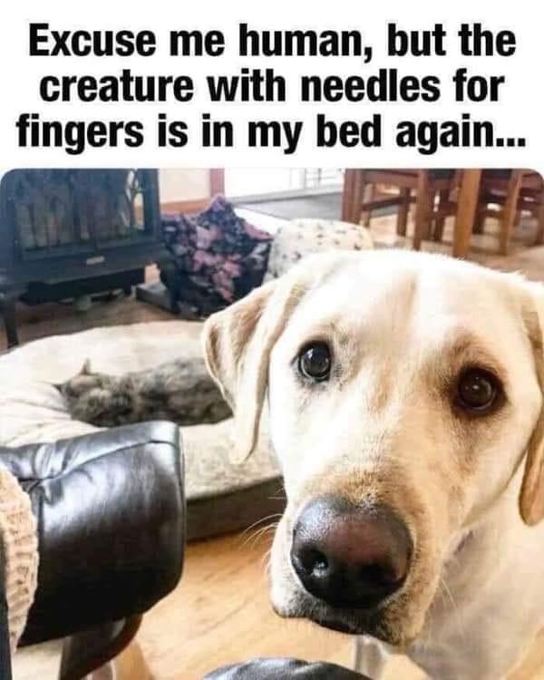 Needle Fingers