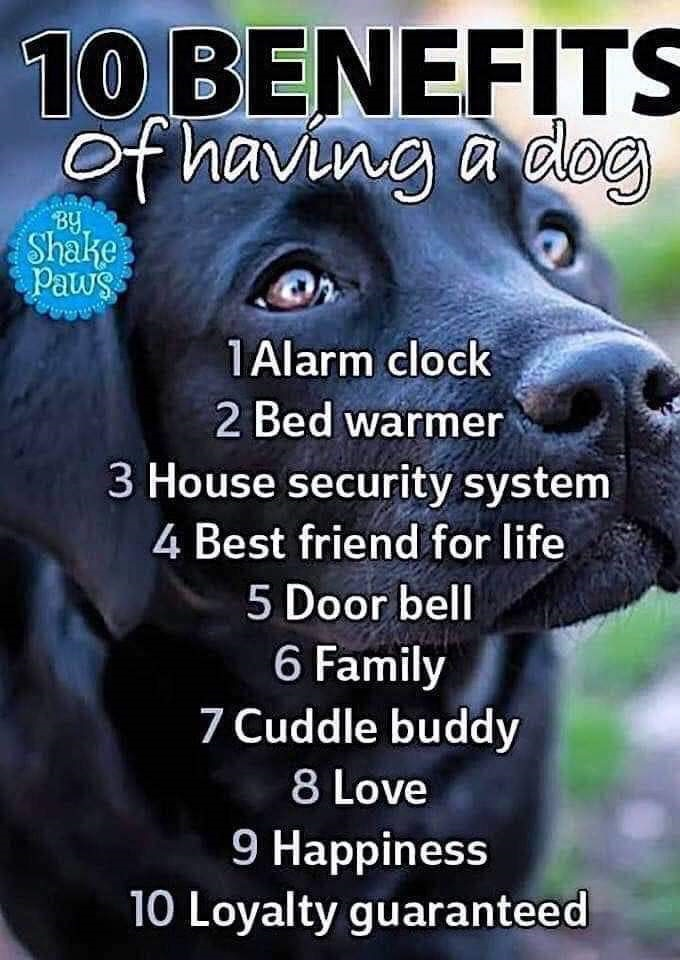 Top Ten Dog Benefits