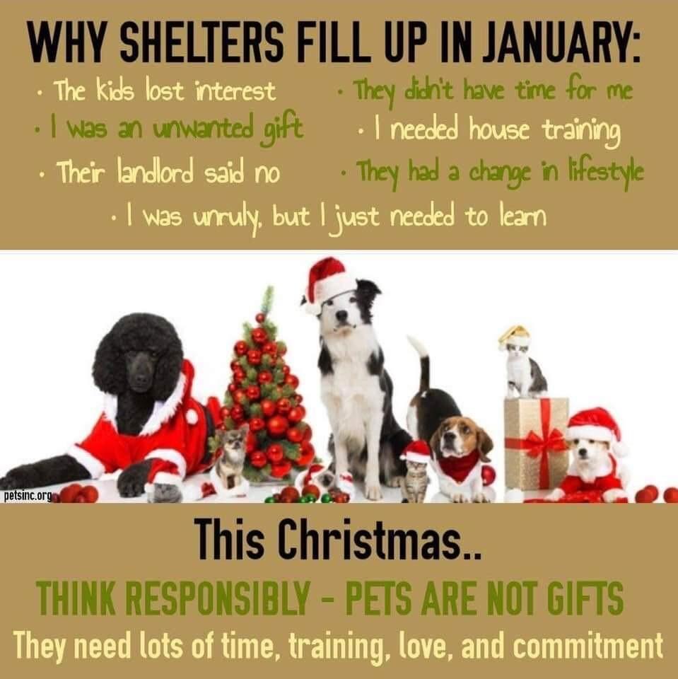 January shelters
