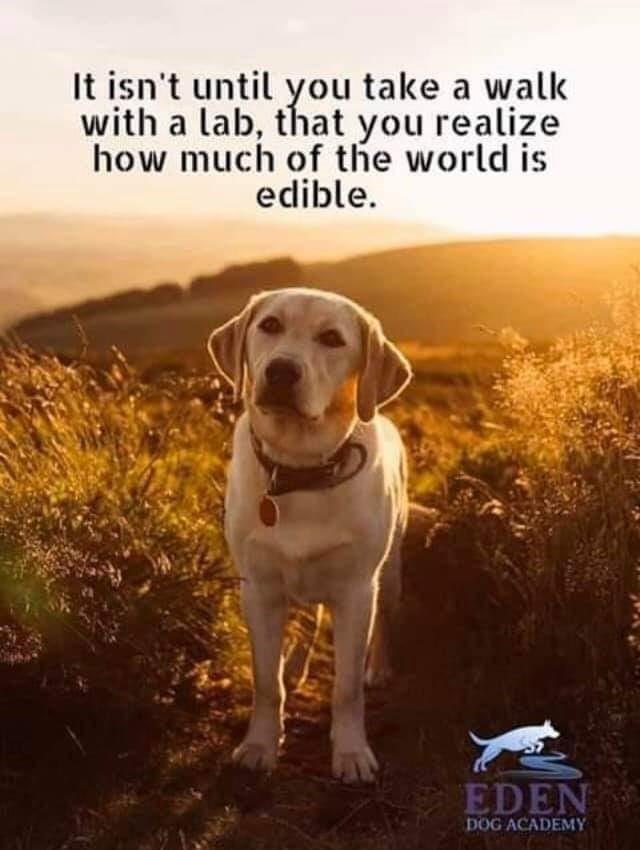 Photo courtesy Eden Dog Academy