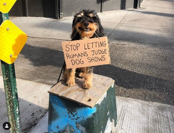 Photo from the Instagram account of DogWithSign