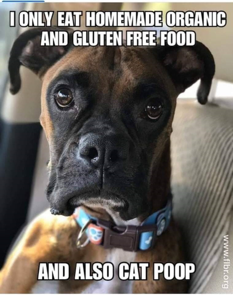 Meme found at Florida Boxer Rescue