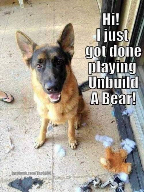 German Shepherd Fans on Facebook