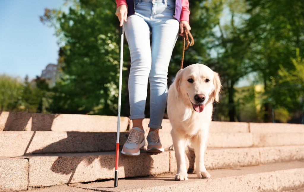 Guide Dog Helping Blind Person With Long Cane Going Down Stairs