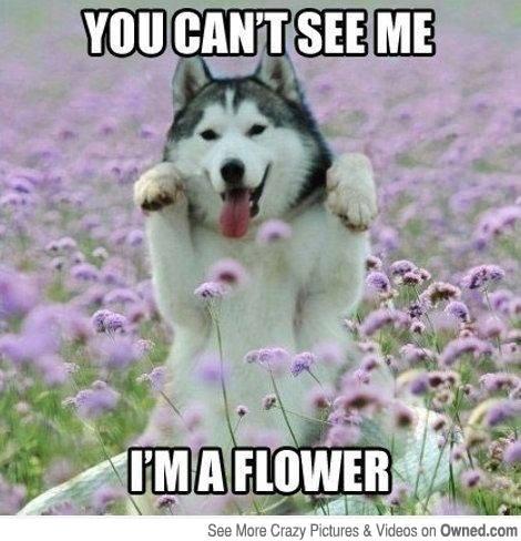Flower Husky