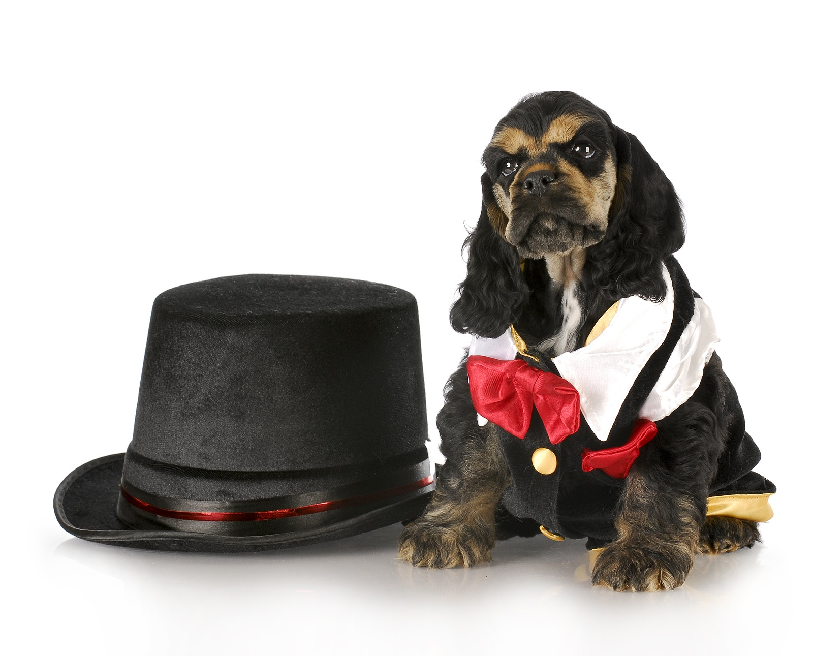 BigStock Photo.  I gotta say, I think the whole puppy would fit in that hat!