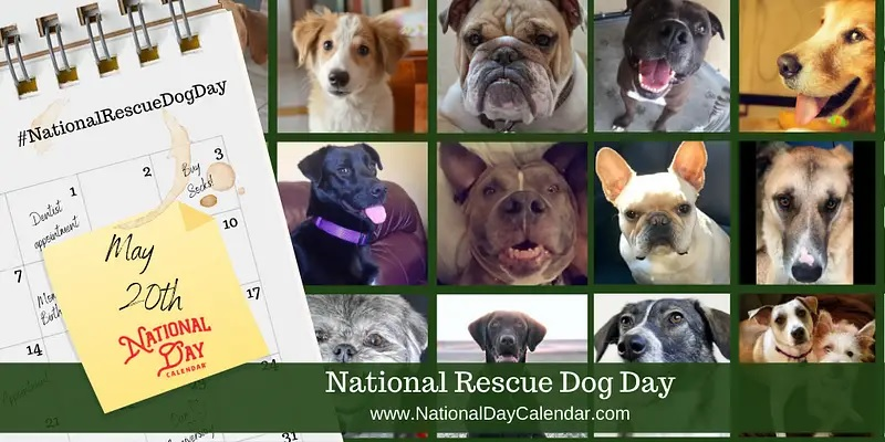 Natl rescue dog day may 20