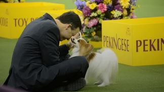 Photo:  Westminster Kennel Club