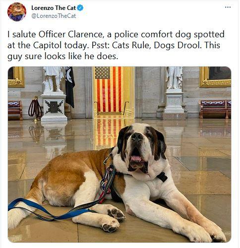 Capitol Comforter