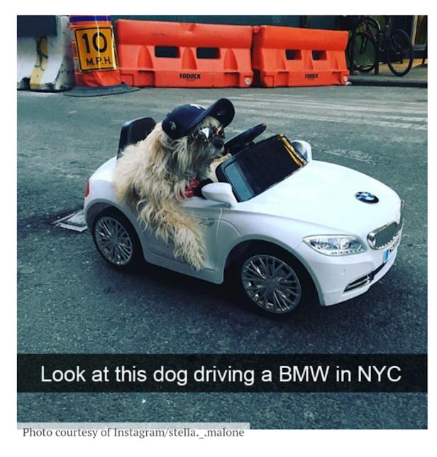 Spoiled BMW