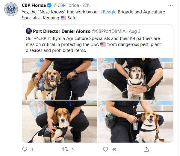 Beagle Brigade CBP