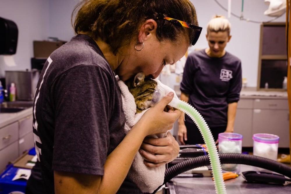 Photo:  Pet Alliance of Greater Orlando