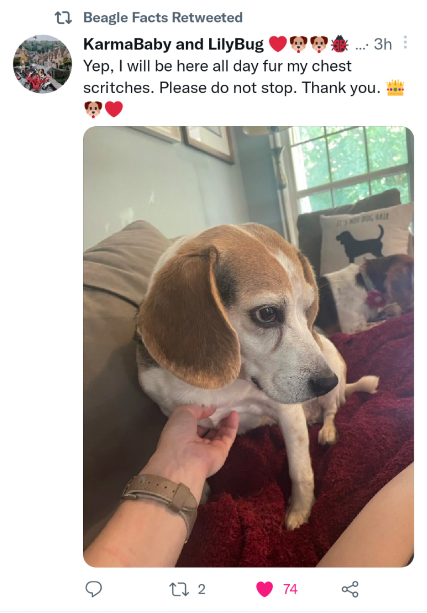 Beagle Scritches