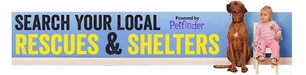 Shetler and Rescue Dog Search