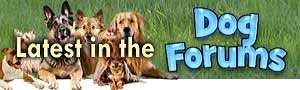Doggies Blog Icon