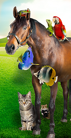 Horse, fish, cat, hamster, lizard group image