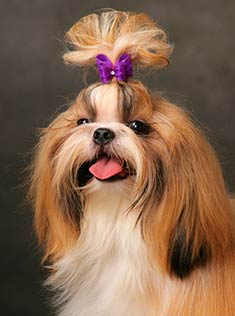 район, Московская фото собак с хвостиками Авто Чери