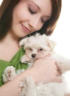 Woman cuddling Maltese puppy