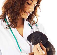 Puppy held by a vet