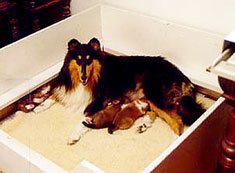 Dog Births on the Way – A Care Guide