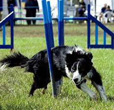 Doggies.com | Dog Sports