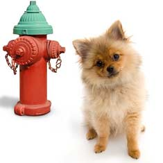 Puppy beside a fire hydrant