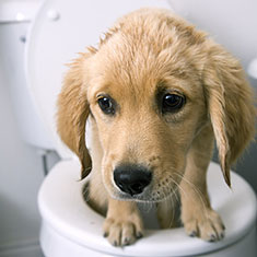 What to do for Dog Diarrhea