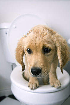Puppy on toilet
