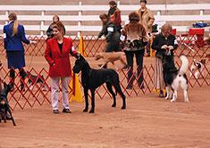 A.K.C. Dog Show