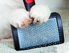 Puppy feet holding slicker brush