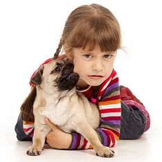 Pug dog biting child's cheek