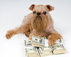 Little dog with cash money